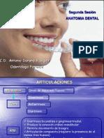 002 Segunda Clase Anatmia Dental