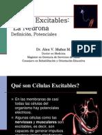 Células Excitables-Sinapsis