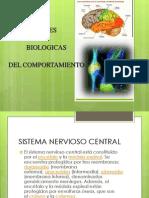basesbiologicasdelcomportamiento-120307201303-phpapp01