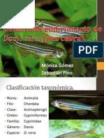 Desarrollo Embrionario Danio Rerio