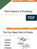 plant anatomy  physiology