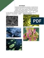 Bacterias, Protozoos