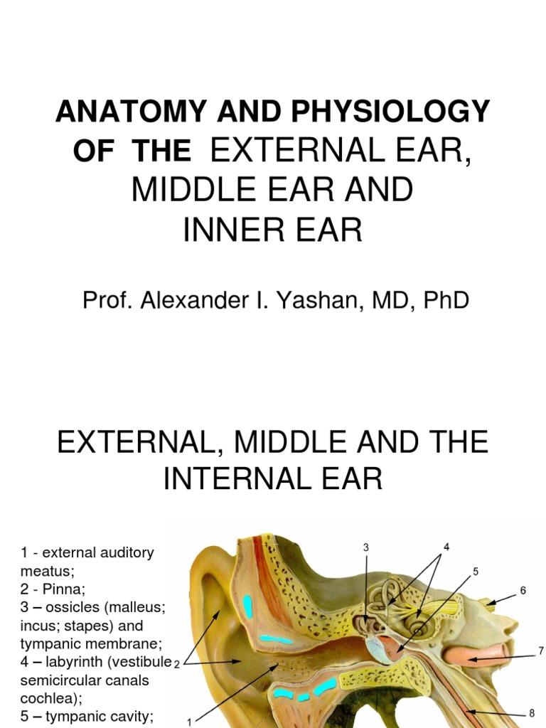 1ear Anatomy | Ear | Auditory System
