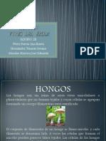 HONGOS presentacion (2).pptx