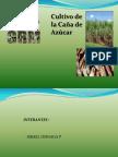 caña_de_azucar.pdf