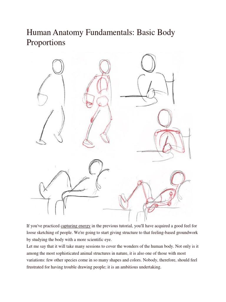 Human Anatomy Fundamentals Basic Body Proportions | Pelvis | Hip