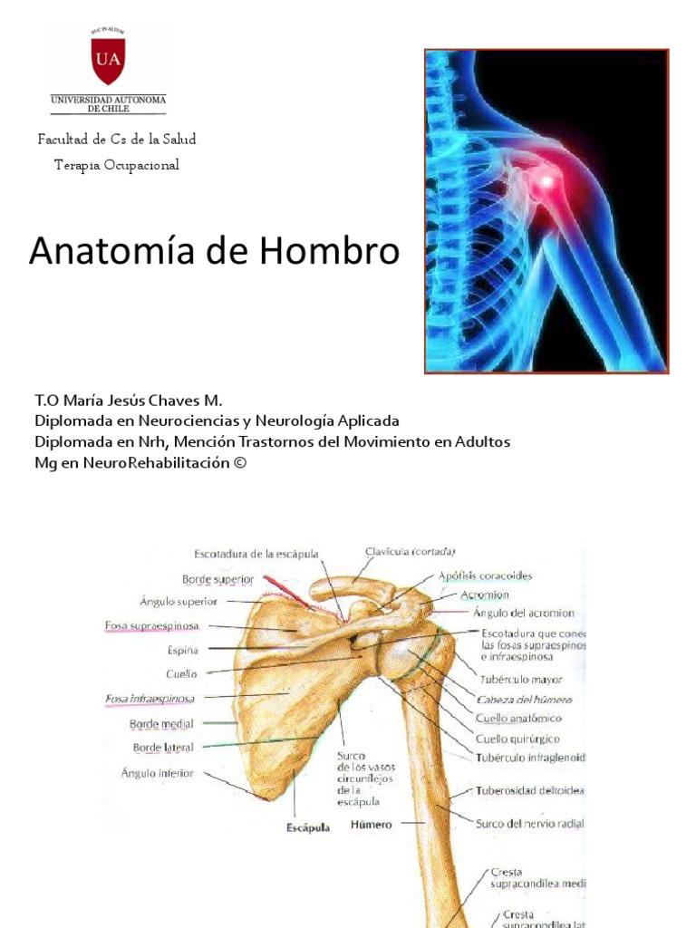 Anatomia de Hombro