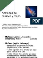 Anatomia de Muñeca y Mano
