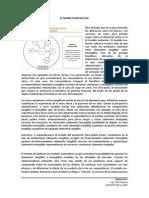 3. Modelo Molecular y Servuccción