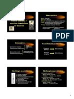 Diapositivas Clase Filariasis
