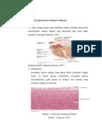 histologi sistem kardiovaskuler