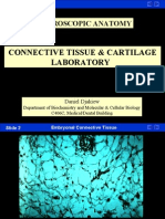 Connective Tissue-Cartilage Laboratory