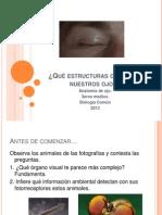 Anatomía e Histología Del Ojo (Visión)