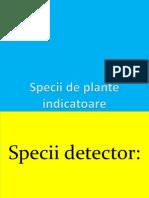 Specii de Plante Indicatoare