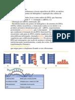 Biologia -Etapas Da Trancrição e Processamento