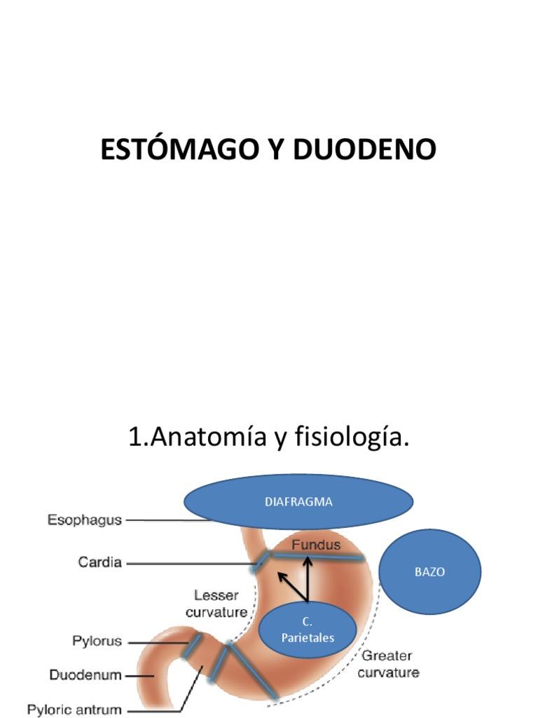 Estómago y Duodeno