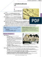7. Demodicosis