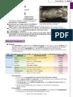 4. Dermatophytosis