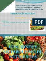 metabolismo diapos