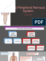 chapter 5 - peripheral nervous system