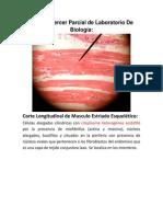 Guia del 3  Parcial Practico biologia.docx