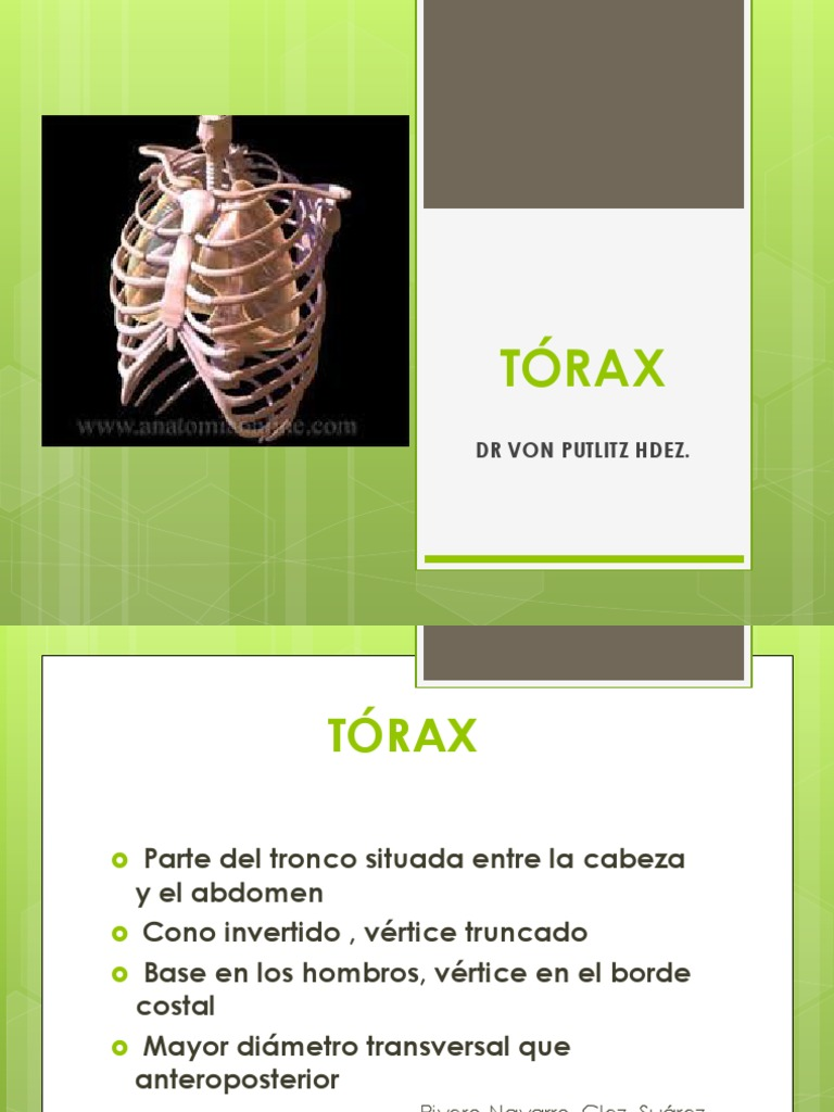 TÓRAX Anatomía de Superficie