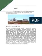 Usina São Fernando-Processo Indústrial