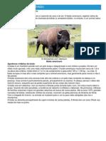 Bisão - Ficha do Animal - Como funciona o bisão.pdf