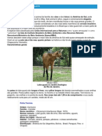 Lobo-guará - Ficha do Animal - Como funciona o lobo-guará.pdf