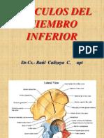 Musc Miemb Inferior