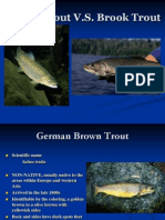 Brown Trout vs Brook Trout