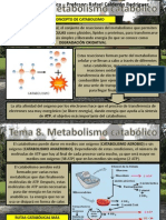 Tema 8 Metabolismo Catabolico