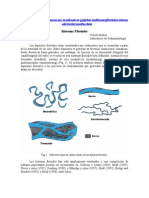 sistemas_fluviales
