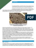 Abelhas - Ficha do Inseto - Como funcionam as abelhas.pdf