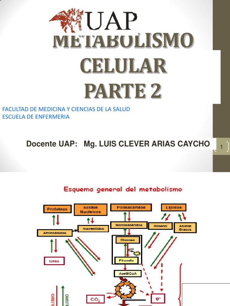 Metabolismo Celular Parte 2: Docente Uap: Mg. Luis Clever..