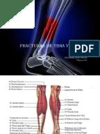 diccionario medico harper collins descargar pdf
