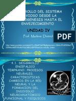 4.1 Desarrollo Cefalico Temprano (Embrionario)