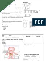 EVALUACIONES DEL DIAGNOSTICO 2014.docx