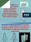Plano Sagital