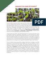 Semis de tomates.pdf