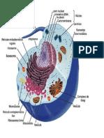 Funcion de Celula Vegetal
