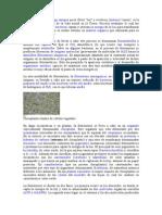 La fotosíntesis.doc
