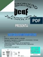 BACTERIAS FOTOHETEROTROFAS 2