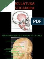 Imagenes de Musculos de La Cara