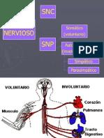 4 Sistema Simpatico y Parasimpatico