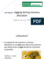 Synaptic tagging during memory allocation