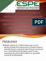 Caracterización Fenotípica, Molecular y Fitopatológica de Colletotrichum (2)