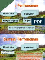 113192218 Sistem Pertanaman