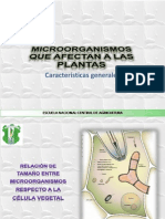 clasificaciondehongos08-090902160629-phpapp01