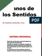 Anatomia O Sensoriales 2012